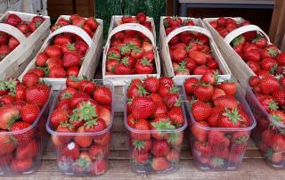 Erdbeerfoto für HP